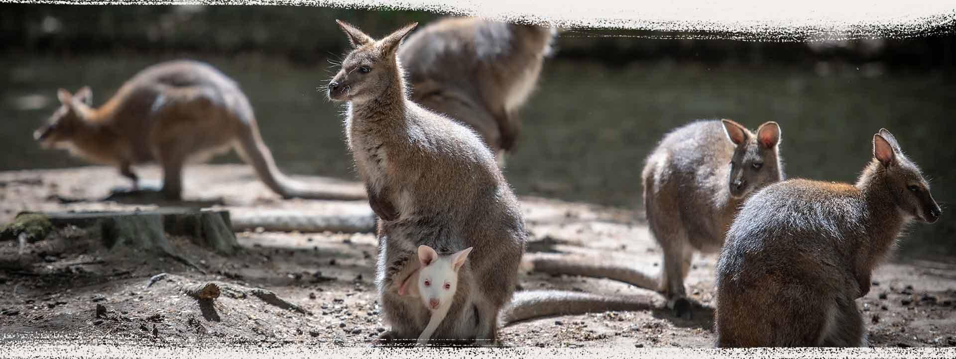 Tierpark, Wildpark in Reken