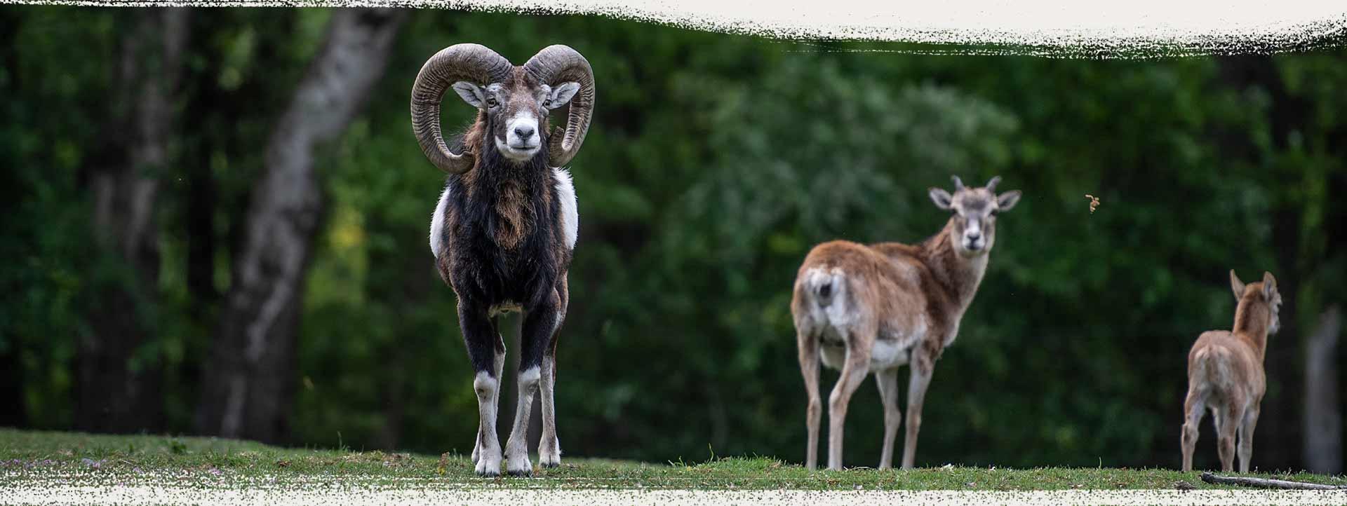 Tierpark, Wildpark